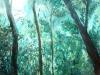 Dschungel I, 80x80 cm
